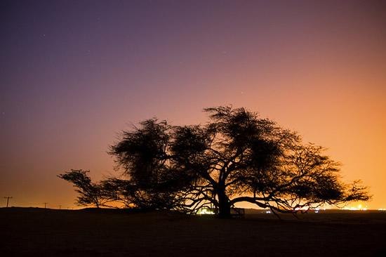 το δέντρο της ζωής